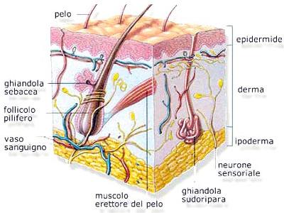 tumori-cutanei